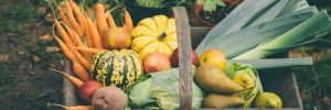 use cash loans in az for fall gardening
