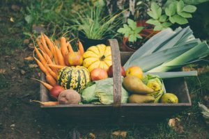 Fall Gardening and How to Prepare